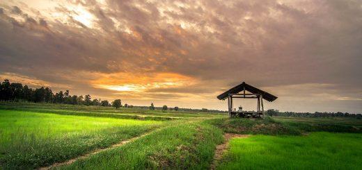 Сколько можно оформить земли в собственность через суд