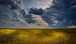Отличительные особенности землеустроительной экспертизы