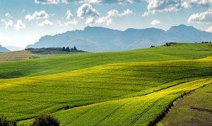 Независимая землеустроительная экспертиза