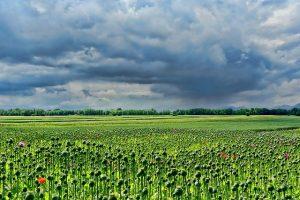 Независимая земельная экспертиза по определению границ участков