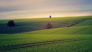 Как проходит землеустроительная экспертиза