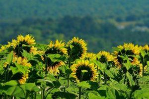 Общие понятия по землеустроительной экспертизе