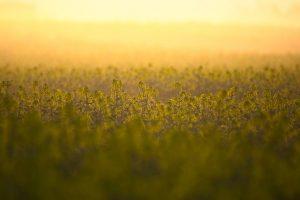 Комплексная землеустроительная экспертиза