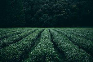 Особенности проведения землеустроительной экспертизы